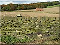 SE2712 : Old stone wall and barn south of Abraham Spring Woods by Neil Theasby