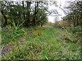 SD6914 : Footpath through Longworth Clough by Philip Platt
