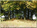 SU1168 : Bronze Age barrow, Overton Hill by Vieve Forward