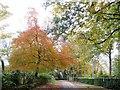 SD7313 : Autumn in Grange Road by Philip Platt