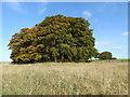 SU1168 : Barrow cemetery, Overton Hill by Vieve Forward