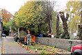 SP9211 : Pollarding the Churchyard Trees at Tring (1) by Chris Reynolds