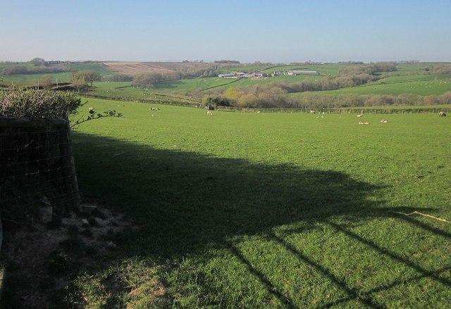 Sheep pasture near Cadbury Barton