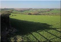 SS6917 : Sheep pasture near Cadbury Barton by Derek Harper