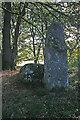 NJ5127 : Corrstone Wood Recumbent Stone Circle (3) by Anne Burgess