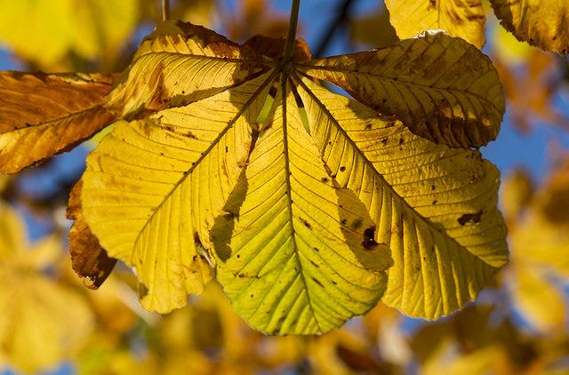 Autumn leaves, Warriston cemetery by William Starkey