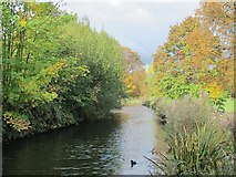 TQ3296 : The New River (old course) - southern end of the Enfield Loop by Mike Quinn