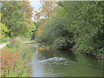 TQ3296 : The New River (old course) - southern end of the Enfield Loop (4) by Mike Quinn