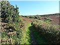SW5927 : South West Coast Path near Rinsey Head by Richard Law
