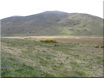 J3431 : The Tullybranigan Bog with Shan Slieve and Slievenabrock in the background by Eric Jones