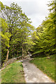 NY3506 : Path into the woods by Ian Capper