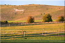SU1062 : Sunlit fields and Alton Barnes white horse by David Martin