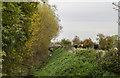 SK7981 : Drain, Cows and Railway track by Julian P Guffogg