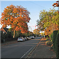 TL4555 : Sedley Taylor Road in autumn by John Sutton