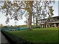 TQ2174 : Tree at National Tennis Centre by Paul Gillett