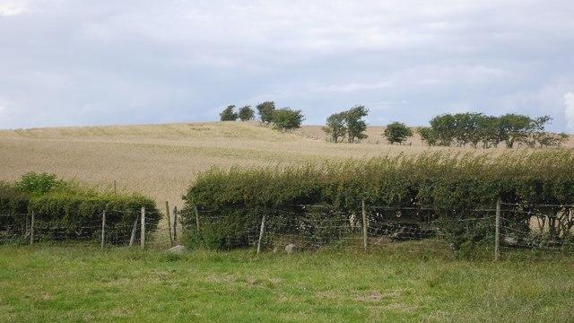 Fields, Halton