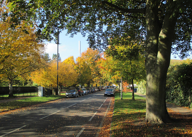 Davy Road: autumn leaves