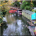 SU9577 : Mallards on Mill Stream, Clewer Village, Windsor by Jaggery
