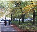 SU9585 : Half term in Burnham Beeches by David Hawgood