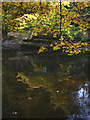 SD5188 : Autumn reflections in the River Kent by Karl and Ali