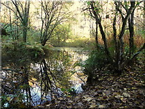 H4963 : Pond, Seskinore Forest by Kenneth  Allen