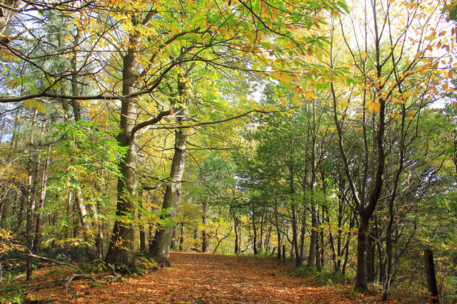 Autumn in Delamere Forest