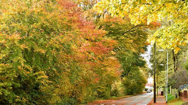 Autumn trees, Cairnburn Road, Belfast (October 2015)