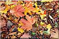 J3875 : Autumn leaves, Old Holywood Road, Belfast (October 2015) by Albert Bridge