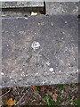SJ6512 : OS rivet - Leegomery, Grainger Drive underpass by Richard Law