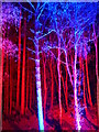 NN9159 : The Enchanted Forest, Pitlochry by Gordon Brown