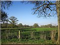 ST5208 : Farmland, Lower Halstock Leigh by Derek Harper