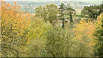 J4772 : Autumn trees, Killynether, Newtownards (October 2015) by Albert Bridge