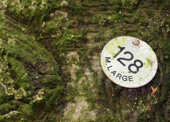 Tree number, Killynether, Newtownards (October 2015)
