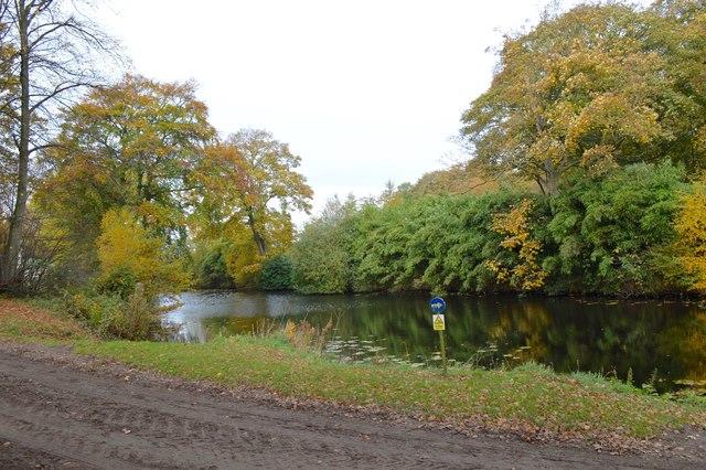 Somerford Park Farm: lake