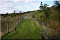 NY7539 : South Tyne Trail towards Windshaw Bridge by Ian S