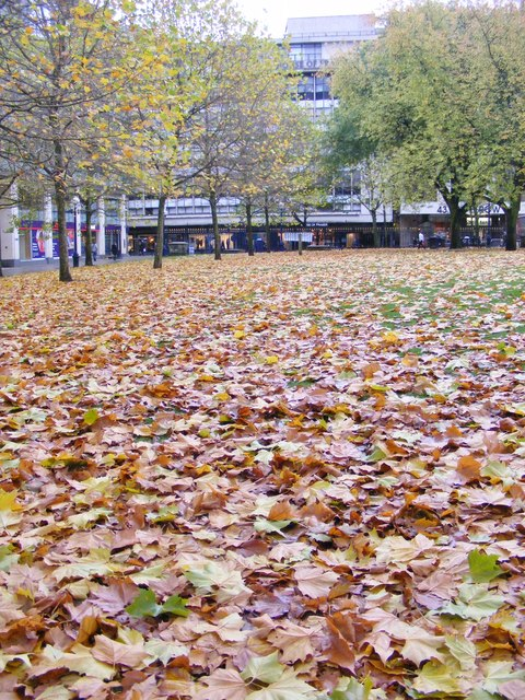 Cathedral Leaves