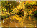 SJ8382 : River Bollin at Styal by David Dixon