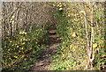 ST1899 : Path above River Sirhowy, near Oakdale by M J Roscoe