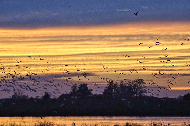 Birds over The Washes