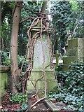 TQ2887 : Vines on the Monument by Bill Nicholls