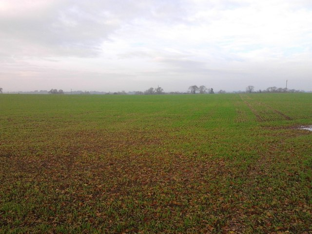 Young crop field off Cycle Route 52