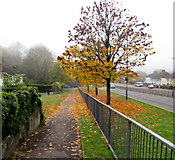 ST3090 : Autumn colours, Malpas, Newport by Jaggery