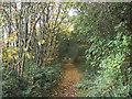 SE3035 : Scott Wood Lane (3) by Stephen Craven