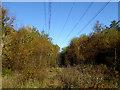NZ1189 : Cut line through Broadmeadow Wood by Oliver Dixon
