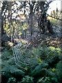 TQ3199 : Spiders Web, Crews Hill, Enfield by Christine Matthews