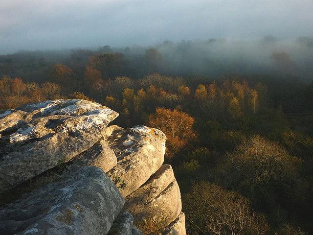 Misty woodland, Warton Crag