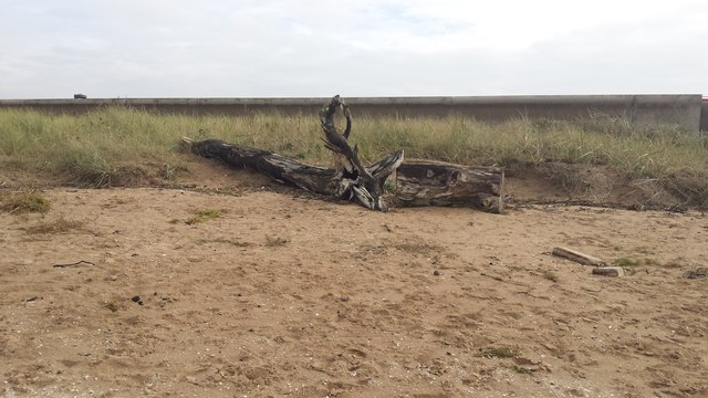 Remains of a tree, Southport foreshore