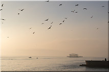 TQ3103 : The West Pier, Brighton, East Sussex by Christine Matthews