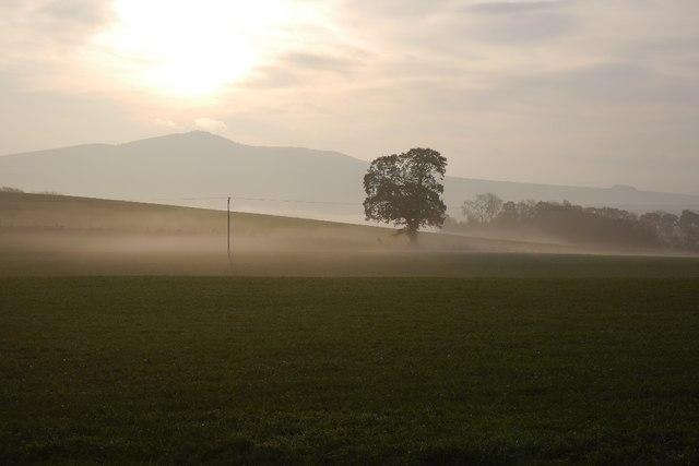 Morning mist, Horsley Hill