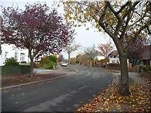 NY4057 : Autumn leaves, Croft Road, Carlisle by Christine Johnstone
